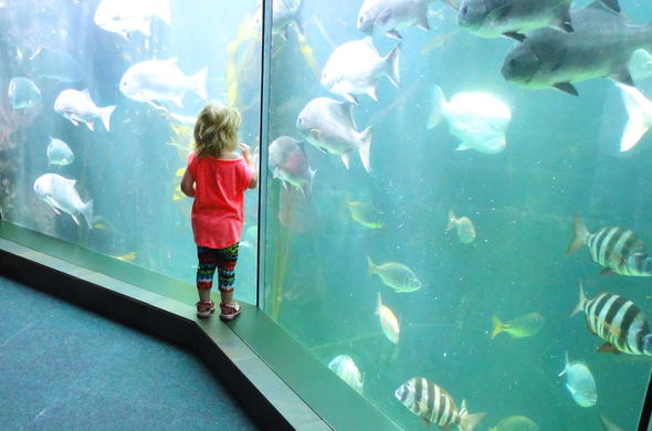 The Two Oceans Aquarium is fun for kids.